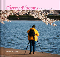 Cherry Blossoms-Cover